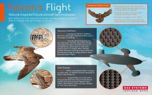 mai-falcon-research-960px_02